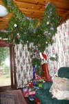 The Xmas tree, crawling up the roof